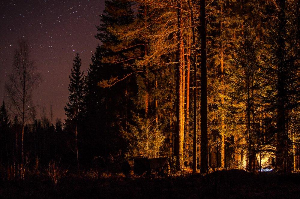 Ночь в лесу.