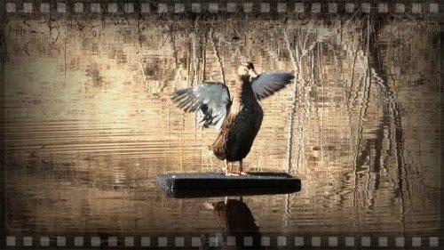 Плотик для подсадной утки, работает на любой глубине.