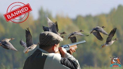 Запрет весенней охоты 2020