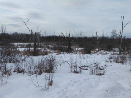 Через пензенское болото