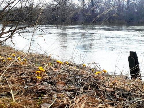 Унылая весна...