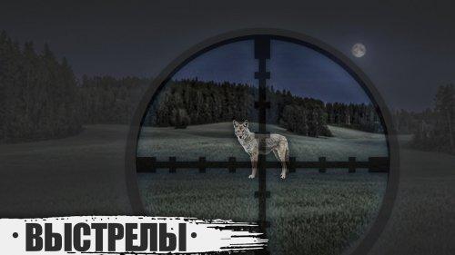 Выстрелы по волкам и шакалам.