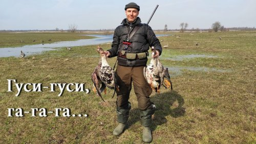 Открытие сезона охоты на гуся и селезня с подсадной.