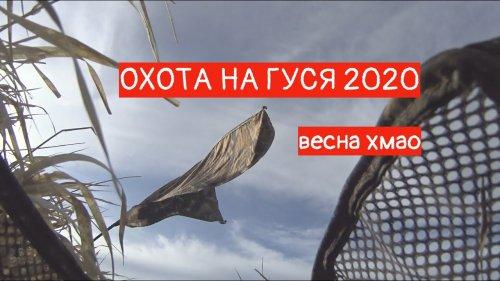 Охота на гуся 2020 весной в ХМАО. АНОМАЛЬНО НЕРЕАЛЬНАЯ ВЕСНА.