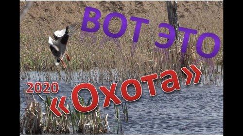 Наступила весна 2020г и наступает дата открытия весенней охоты, на селезней уток и гусей