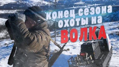 Конец сезона охоты на волка в Якутии.