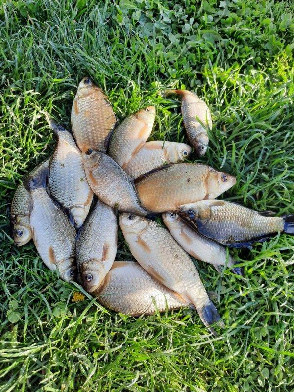 Рыбалка в Мае на карася , что ещё может быть прекрасней .