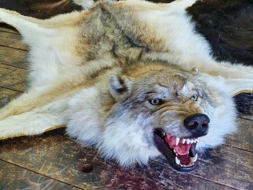 Ковер из шкуры волка