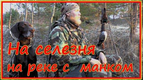 """Весенняя """"ходовая"""" охота на селезней с манком и чучелом"""