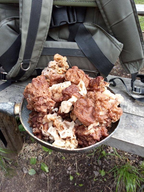 Первые грибы.