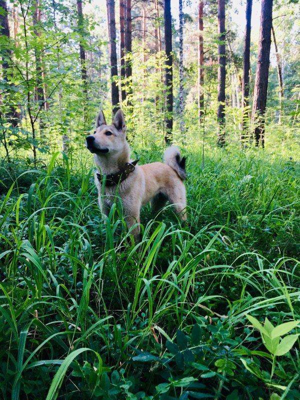 Прогулки в лесу ...