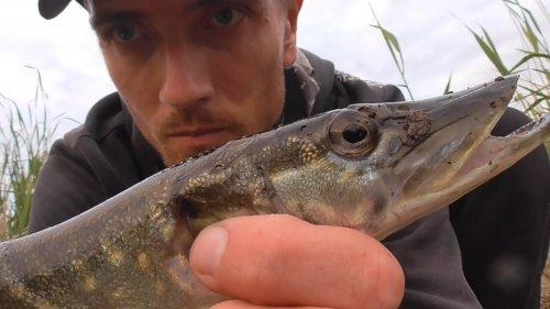 Рыбалка. ЩУКА на ЖИВЦА. Рыбалка на щуку на поплавок 2020