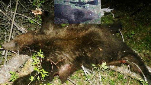 Охота на медведя с привады в 2020г