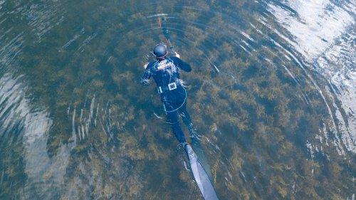 Где сазан, там и охотник. ДАРЫ ЕНИСЕЯ. Подводная охота на Красноярском водохранилище.