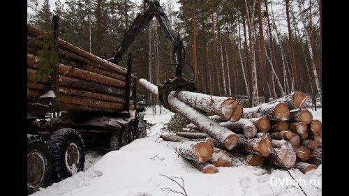 Лесорубы уничтожили весь путик
