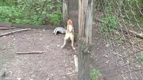 Притравка собаки