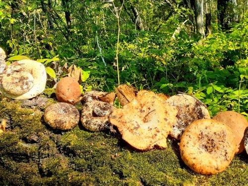Пока грибы....