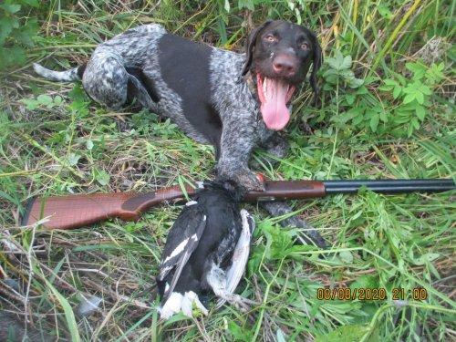 Я стою, а пёс стреляет.... :)