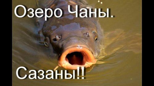 Озеро Чаны. Сазаны на удочку лайт!!!