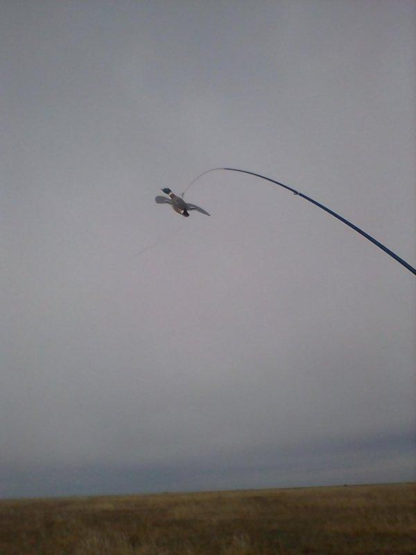 Чучело летящей утки