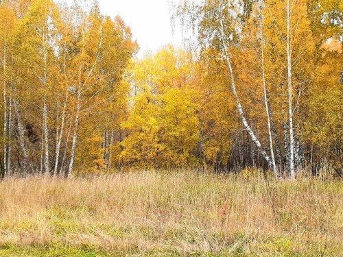 Золото осени, время боровой охоты на полях.....