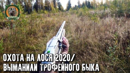Охота на лося 2020/Трофейный бык/Вабим лося на гону