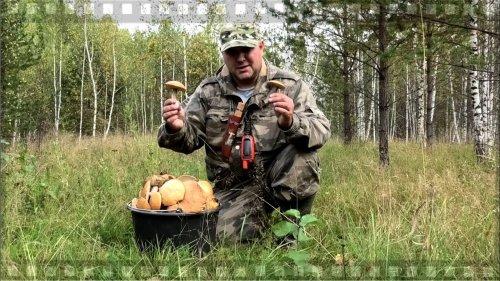 О том как Сибирские мужики грибы собирают которых у них хоть литовкой коси.