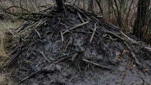 В поисках бобровых хат / Looking for beavers
