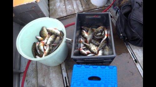 Охота и рыбалка в Коми.