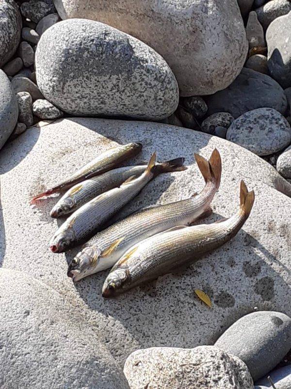 Хариус. Рыбалка в Хакасии