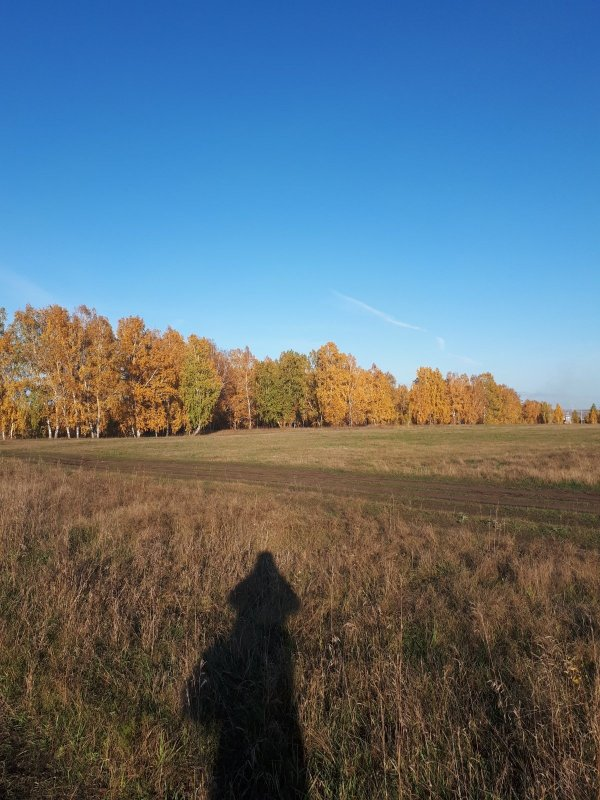 Осенняя пора.....