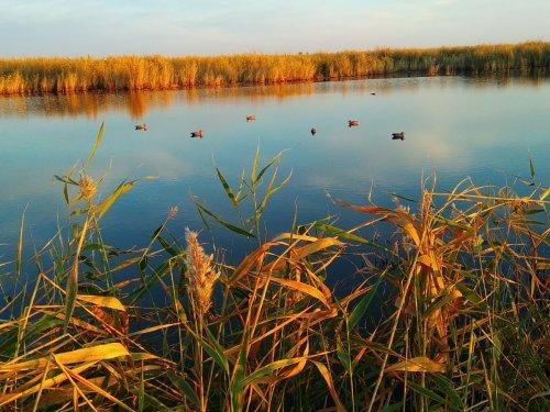 Немного фото с охоты   выходные Краснозерский р-он НСО