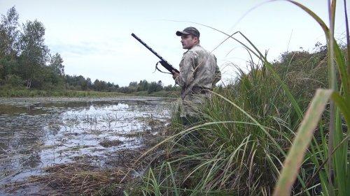 Северная утка пошла. Настрелял кучу мяса за час. Duck hunting in autumn.