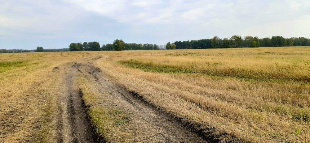 По полям пшеничным!
