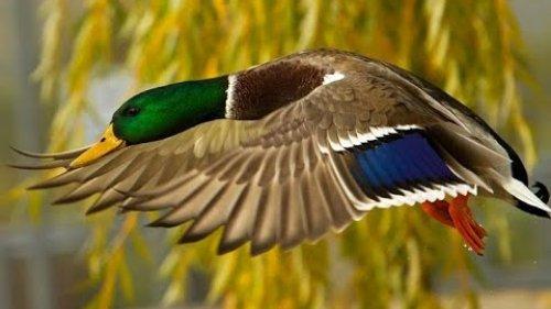 Охота на уток на реке Чу 23 -25 октября 2020 г