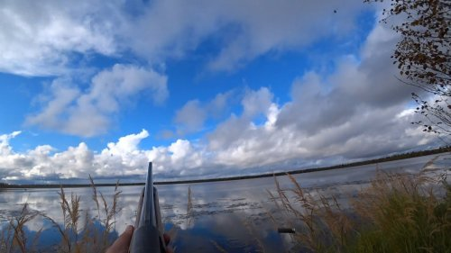 Охота на озере.  Северная утка пошла.
