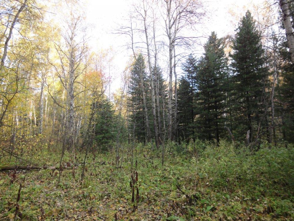 Пригородный лес