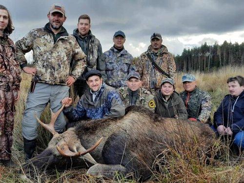 Вот и мы открыли сезон загонной охоты на лося . Лицензию закрыли успешно