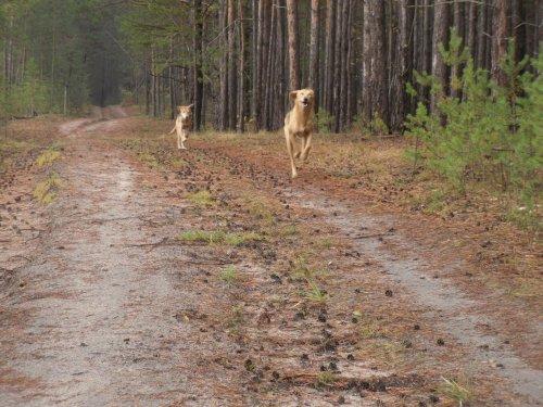 Первый в жизни выход в лес.