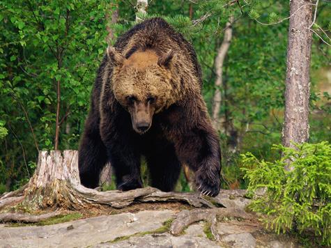 Медвежьи были