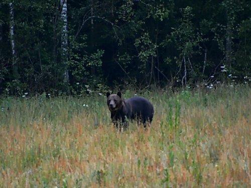 Витин медведь.