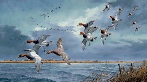 За северной уткой.Охота на уток 8 - 9 ноября 2020 г