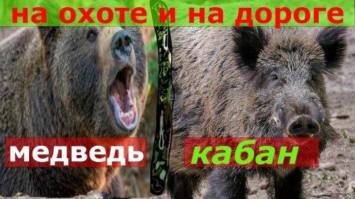 Нападения кабана и медведя