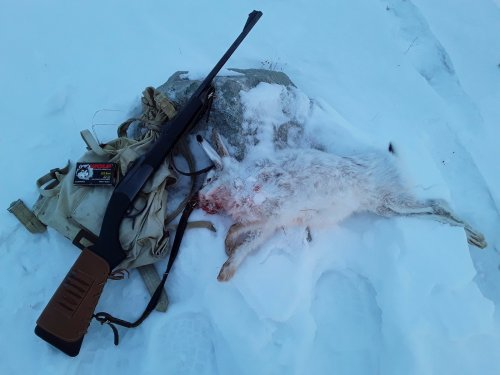 Охота на зайца с МР-18мн(223 к)