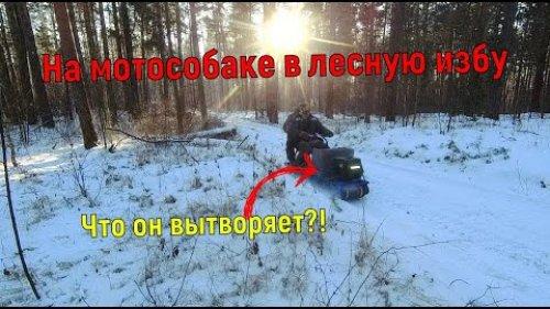В морозы на мотобуксировщике в лесную избу балаган