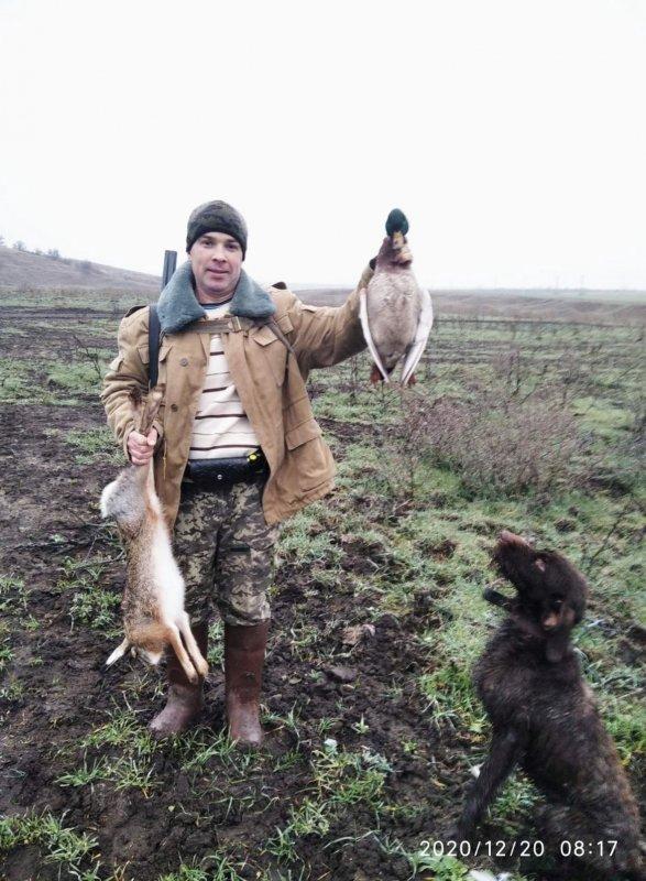 Утка вывела на зайца)
