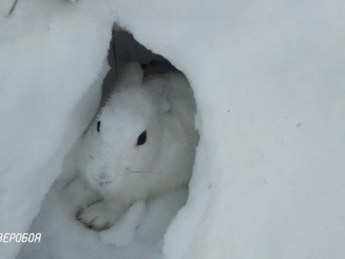Заяц в норе