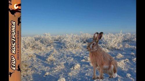 Охота на зайца в степи. Мороз и солнце.