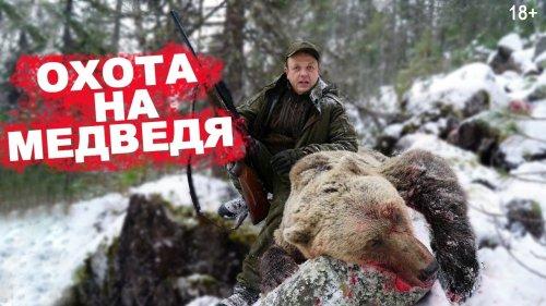 Атака двух медведей.  Охота на медведя с  лайками 2020