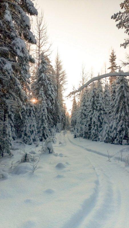 короток зимний день